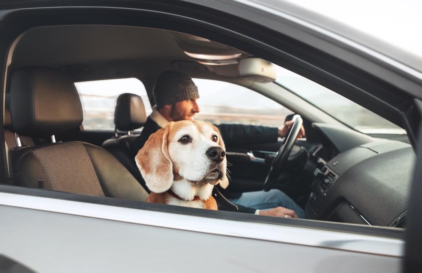 joy ride with dog
